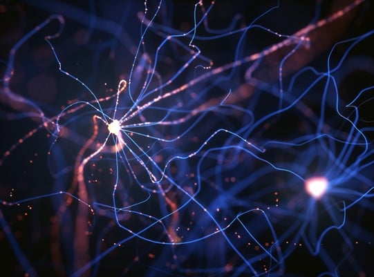 RHYTHM OF BEING – PART THREE – THE NEURON AND SYNAPSE